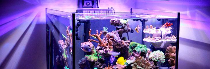Визуальный эффект света дает аквариуму светодиодами